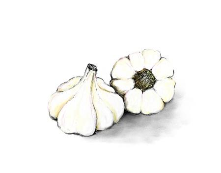 garlic clove: Illustration of garlic bulbs on white background