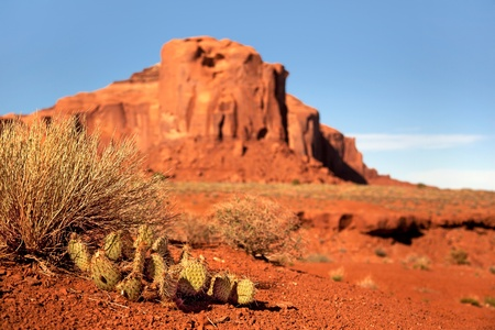 rock formations: Prickly pear cactus and indigenous plants growing in the desert  Monument Valley, Utah, USA  Intentional shallow depth of field  Stock Photo