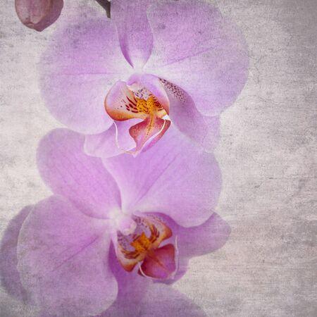 Vintage orchid  photo