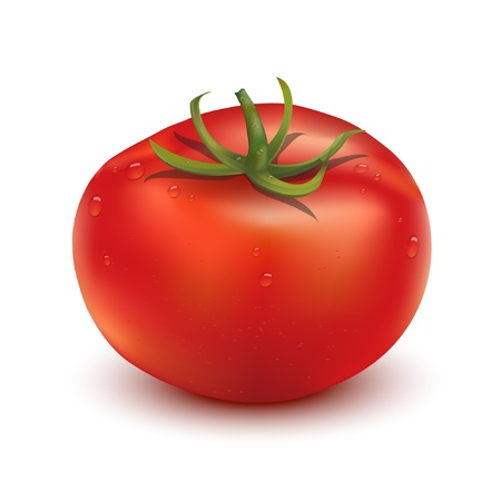 Photo-realistic image of a single tomato  EPS10 vector format  Vector
