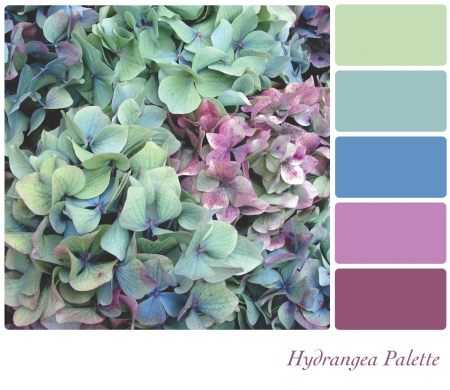Hydrangea flower background colour palette with complimentary colour swatches photo