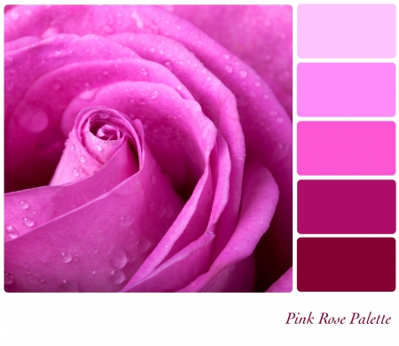 complimentary: Pink rose colour palette with complimentary swatches