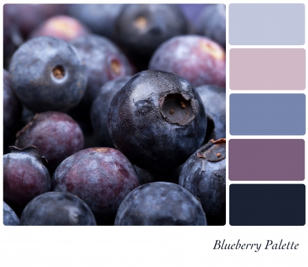 complimentary: Fresh blueberry background colour palette with complimentary swatches