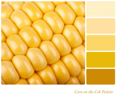 complimentary: Corn on the cob background  Colour palette of complimentary shades  Stock Photo