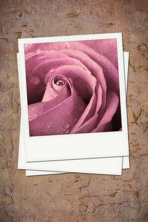 Faded photos of a pink rose on vintage effect background  photo