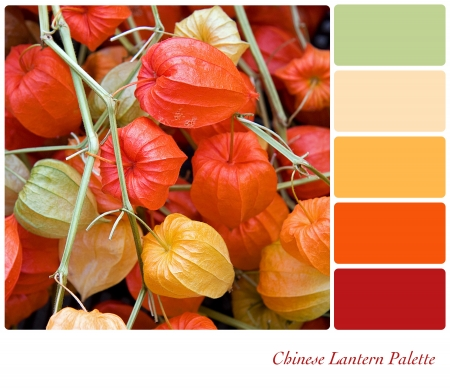 Chinese Lantern plant background colour palette with complimentary swatches  Stock Photo - 15648843