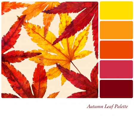 Autumn leaf palette with complimentary colour swatches Stock Photo - 16610892