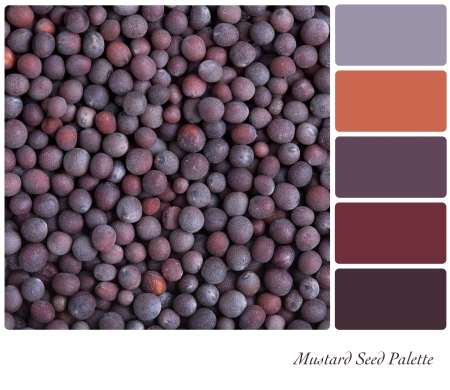 A background of black mustard seeds palette with complimentary colour swatches photo