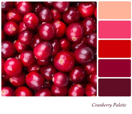 color palette: A background of fresh, juicy cranberries  Colour palette with complimentary colour swatches