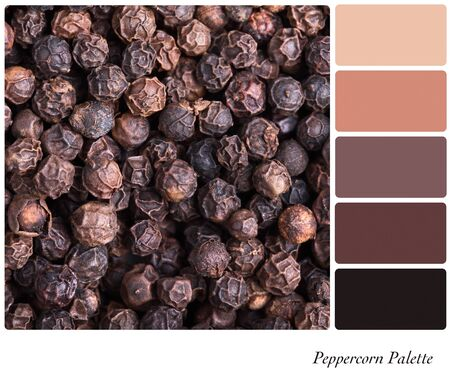 A background of black peppercorns palette with complimentary colour swatches photo