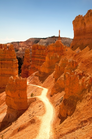 A trail through the spectacular orange landscape of Bryce Canyon, Utah, USA photo