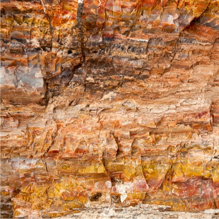 Closeup of petrified wood found in the Utah and Arizona regions of America photo