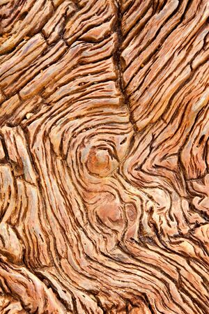 petrified fossil: Closeup of petrified wood found in the Utah and Arizona regions of America Stock Photo