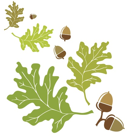 Oak leaves and acorns motif. Vector