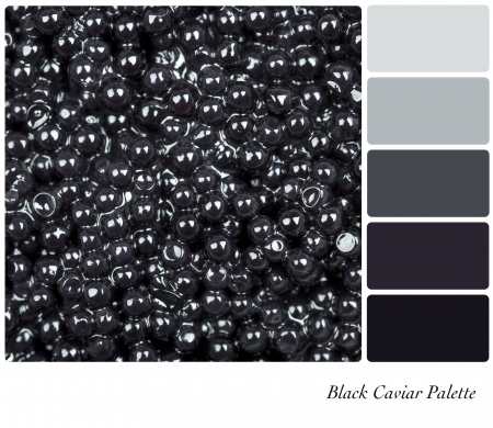 group of fish: A colour palette with a background texture of black caviar with complimentary colour swatches. Stock Photo