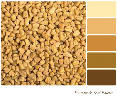 A colour palette with a background texture of fenugreek seeds with complimentary colour swatches