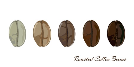 roasting: Coffee beans showing various stage of roasting from the green bean through to a dark roast   Illustration