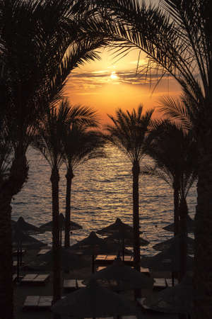 The sun rising over palm trees and the beach, Red Sea, Egypt  photo