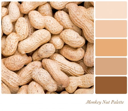 monkey nuts: A closeup of monkey nuts in a colour palette with complimentary colour swatches Stock Photo