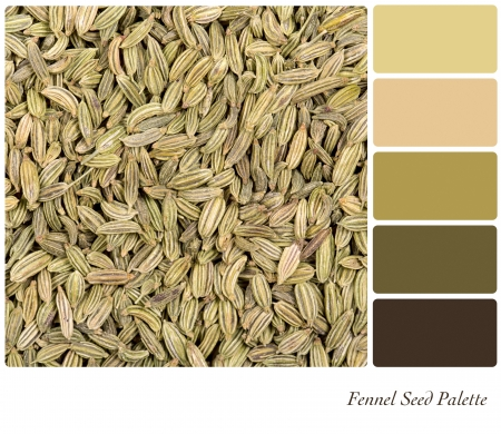 color palette: A background of dried fennel seeds in a colour palette, with complimentary colour swatches.
