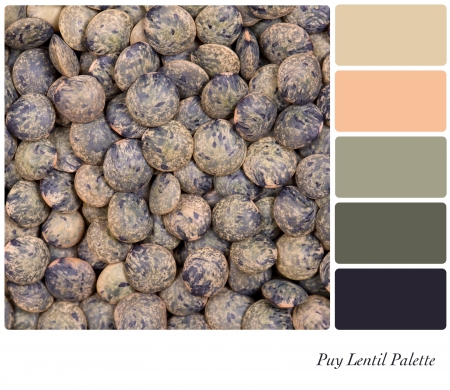 A closeup background texture dried French Puy lentils,  in a colour palette with complimentary colour swatches  photo