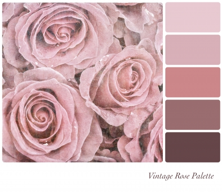 A background of faded pink roses in a colour palette, with complimetary colour swatches