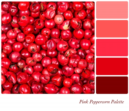 color tone: A background of pink peppercorns in a colour palette, with complimentary colour swatches