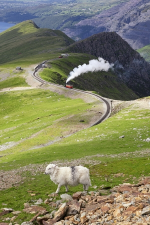 Sheep and mountain railway from the Llanberis Pass, Mount Snowdon, Snowdonia, Wales UK Imagens