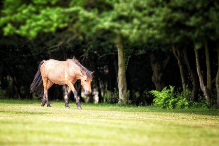 hampshire: New Forest pony in a clearing, Nomansland, Hampshire, UK Stock Photo