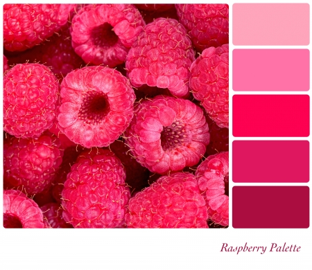 complimentary: A background of fresh raspberries in a colour palette with complimentary colour swatches