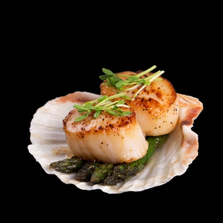 Studio closeup of seared scallops, garnished with pea shoots and served on a bed of asparagus, presented on a scallop shell. Isolated on black background.