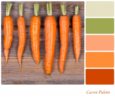 complimentary: A row of fresh carrots on wooden background, in a colour palette with complimentary colour swatches