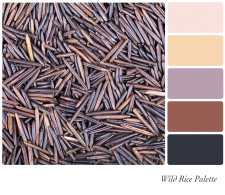 complimentary: A background of Canadian wild rice in a colour palette with complimentary colour swatches Stock Photo