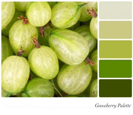 complimentary: A background ofresh gooseberries in a colour palette with complimentary colour swatches