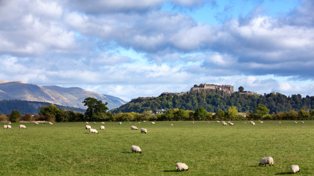 robert: A view of sheep grazing with Stiling Castle in the distance  Stirling, Scotland Stock Photo