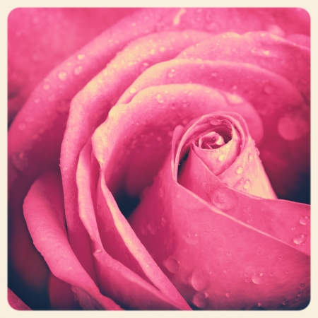 Faded pink rose with retro style processing  Intentional vignette and frame to create old photo effect  photo