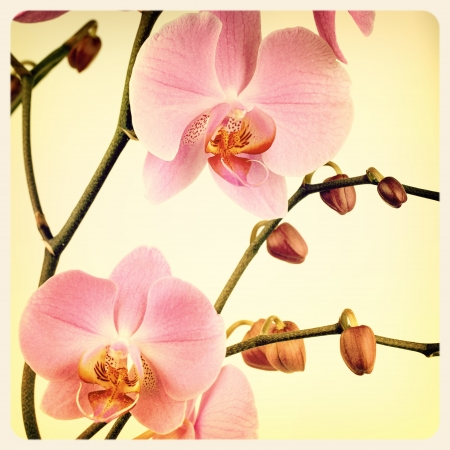 Retro style pink orchid . Cross processed to look like an aged instant photo. photo