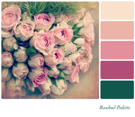A background pale pink rosebuds in a colour palette,  with complimentary colour swatches  Textured retro style effect
