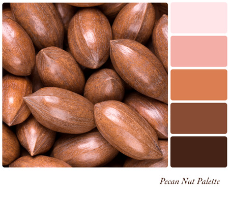 hickory nuts: pecan nuts in a colour palette with complimentary colour swatches Stock Photo