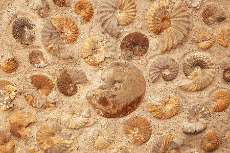 A background texture of ammonite fossils embedded in rock