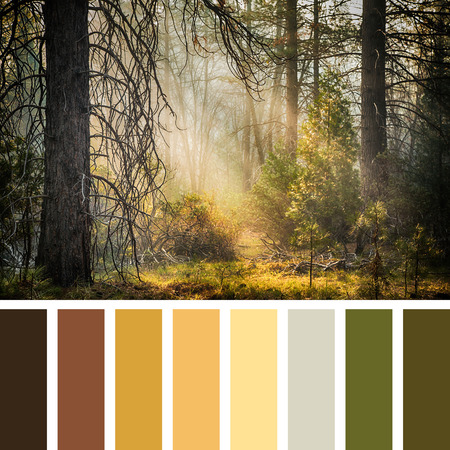早朝の日光ストリーム、Maripose グローブ、ヨセミテ、アメリカの木。無料 c0lour スウォッチとカラー パレット。