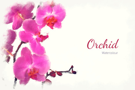 A watercolour pink orchid over a white background, with space for text. EPS10 vector format Archivio Fotografico