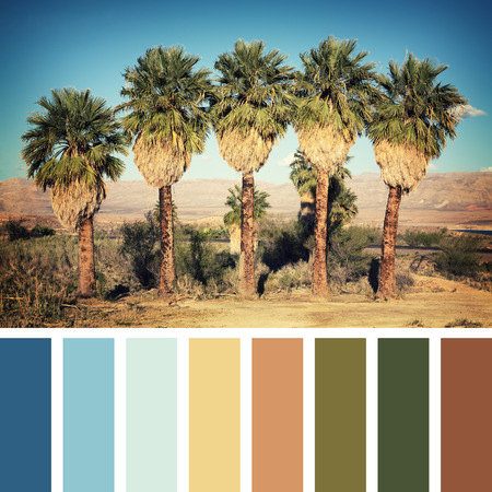 color palette: Palm trees in the desert, Nevada, USA. Stock Photo