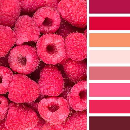 vibrant colours: A background of fresh raspberries, in a colour palette with complimentary colour swatches. Stock Photo