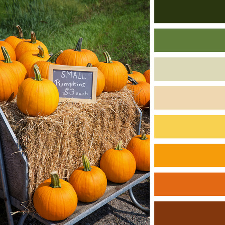 complimentary: Pumpkins for sale, displayed on hay bales, In a colour palette with complimentary colour swatches. Stock Photo
