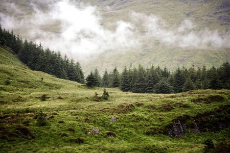 highland: Low cloud over a pine forest in the Scottish Highlands, Scotland, UK