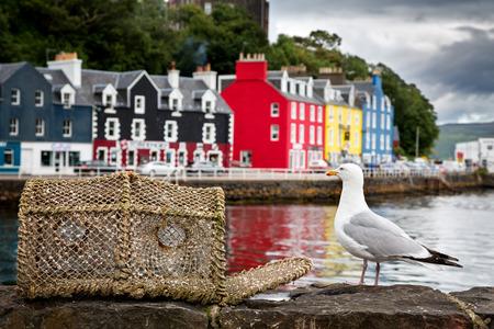 gaviota: Selectivo se centran en una gaviota en el muelle, con el colorido pueblo de Tobermory en el fondo. Isla de Mull, Escocia, Reino Unido