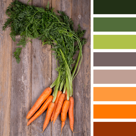 complimentary: A bunch of fresh carrots on wooden background, in a colour palette with complimentary colour swatches