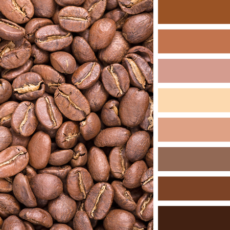 swatches: A background of New England roast coffee beans. In a colour palette with complimentary colour swatches.