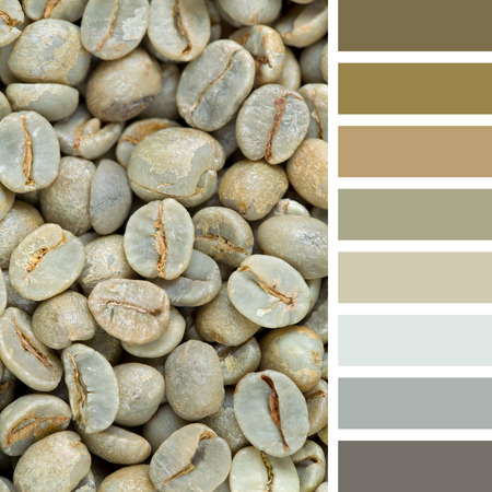 complimentary: A background of raw green coffee beans. In a colour palette with complimentary colour swatches.
